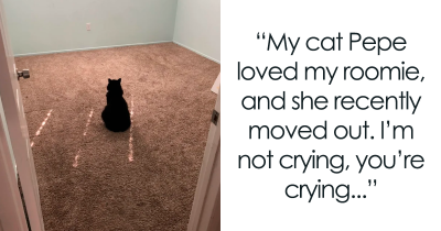 These 35 Wholesome Cat Posts Will Brighten Up Your Day.