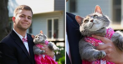 Teen takes a smitten cat for prom date and everyone is in love with this.