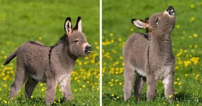 20+ Adorable Tiny Donkeys That Will Make You Go 'Awww'