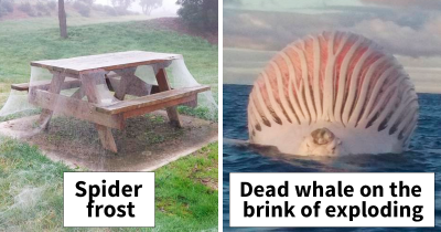 40 Pics Prove That Australia Is The Land Of 'Nope'