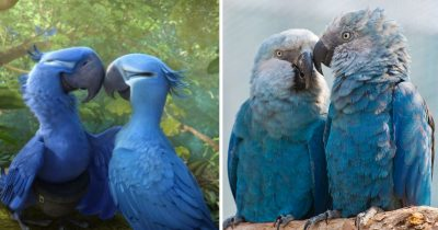 The Blue Spix's Macaw Parrot Seen In The Movie 'Rio' Is Now Extinct.