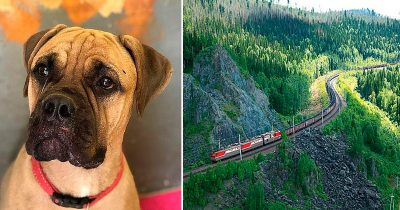 Dog Walks 125 Miles With 'Tears In Her Eyes' To Get Back To Owner Who Rejected Her