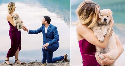 Man Surprisingly Proposed His Girlfriend With A Tiny Golden Retriever