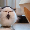 Meet Zuu - The Cat Who Personifies The Feeling When You Hear Your Alarm Clock Ringing.