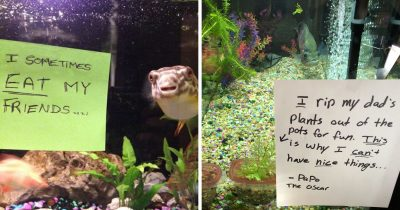 23 Fish Hilariously Shamed For Being Naughty