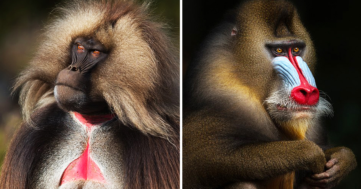 Most Unusual Primates Strike A Pose For Hilarious Yet Captivating Close-Up Portraits.