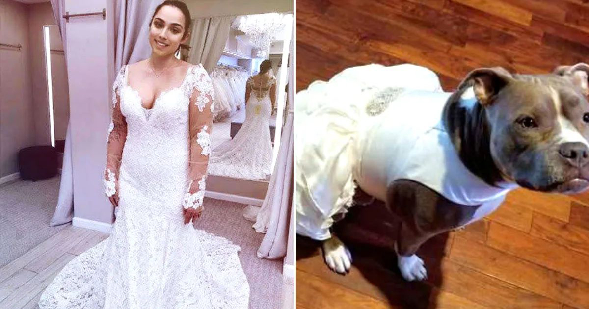 Bride Purchase A Matching Wedding Dress For Her Pit Bull Dog And It's Honestly A Dog Mom Goal