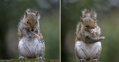 Cute Squirrel Captured Dancing Like A Hip-hop Star In Adorable Pictures.
