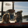Lady and the Tramp live action trailer is out.