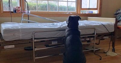 Loyal Dog Waits For Owner Next To Empty Hospital Bed, Not Knowing He Has Gone Forever