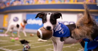 Cute Puppy Bowl event promotes pet adoption.